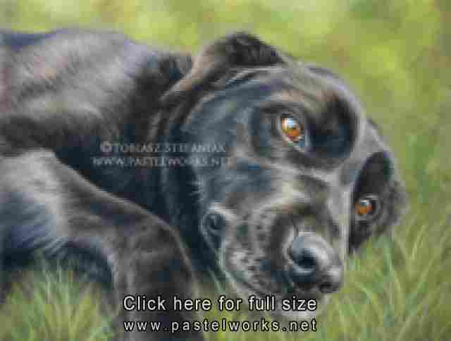 black labrador retriever pastel drawing by tobiasz stefaniak www pastelworks net