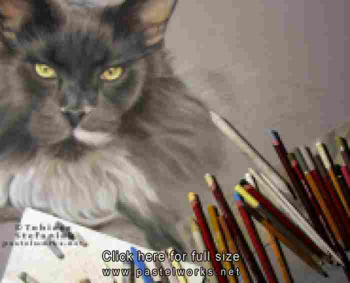 maine coon pastel painting work in progress by tobiasz stefaniak www pastelworks net