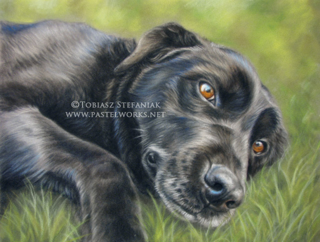 black labrador retriever pastel drawing by tobiasz stefaniak
