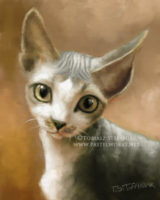 Cornish rex digital painting