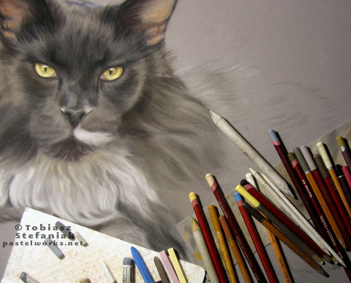 maine coon pastel painting work in progress