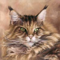 Maine coon  portrait in soft pastel