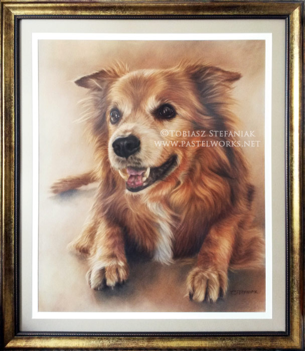 senior dog portrait framed