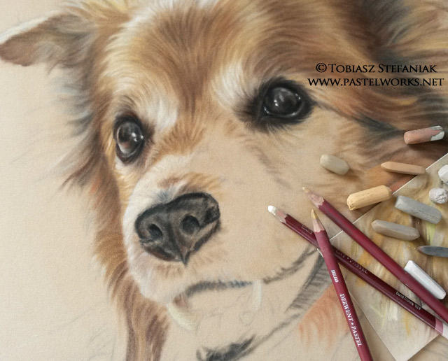 dog portrait work in progress
