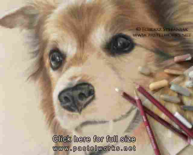 senior dog pastel drawing portrait in progress1 tobiasz stefaniak www pastelworks net