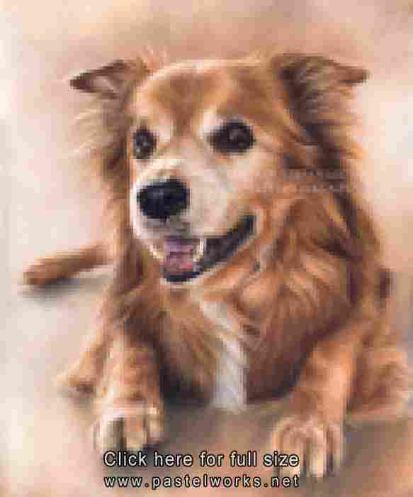senior dog pastel drawing portrait tobiasz stefaniak www pastelworks net
